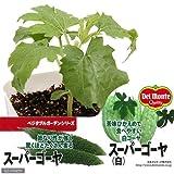(観葉植物)緑のカーテン デルモンテ 野菜苗 スーパーゴーヤ(白)苦味ひかえめ 3号(1ポット) 家庭菜園