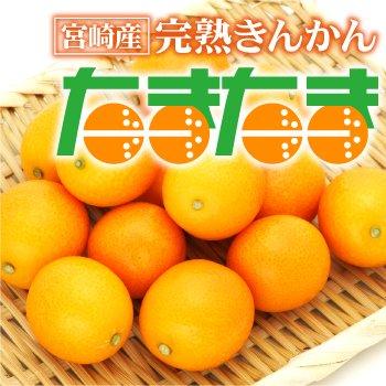 宮崎県産 完熟きんかん「たまたま」 2Lサイズ 3kg入り