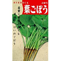 ごぼう 種 【葉ごぼう】 小袋(約10ml)