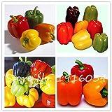 50個のPCSペッパー種子6色混合黄紫赤緑青白ミックススウィートベル唐辛子の種野菜パプリカ