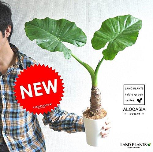 【置くだけで運気上昇】風水に良い観葉植物の人気おすすめ商品10選のサムネイル画像