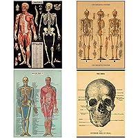 人間の身体ビンテージスタイルの生物学ポスター20 x 28 X4枚 [並行輸入品]