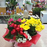 Amazon.co.jp季節の鉢植え 寄せ鉢ギフトLL 3から5種類の鉢花や観葉植物をかごにおまかせアレンジ