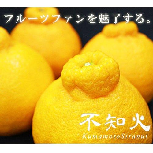 【 熊本県産 】 不知火柑 (デコポンと同品種) (箱込 約5kg 15玉?22玉)
