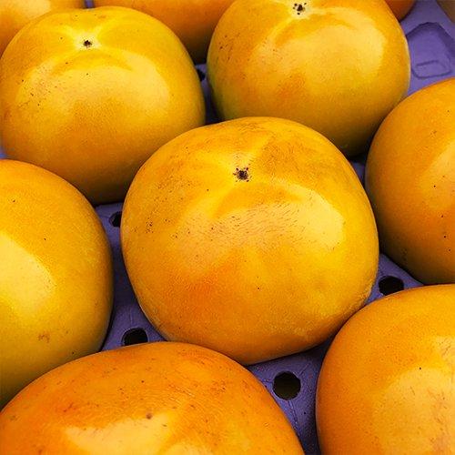 【 九州産 】 太秋柿 (たいしゅうかき) 高級 (箱込 約1.5kg (3〜8玉))