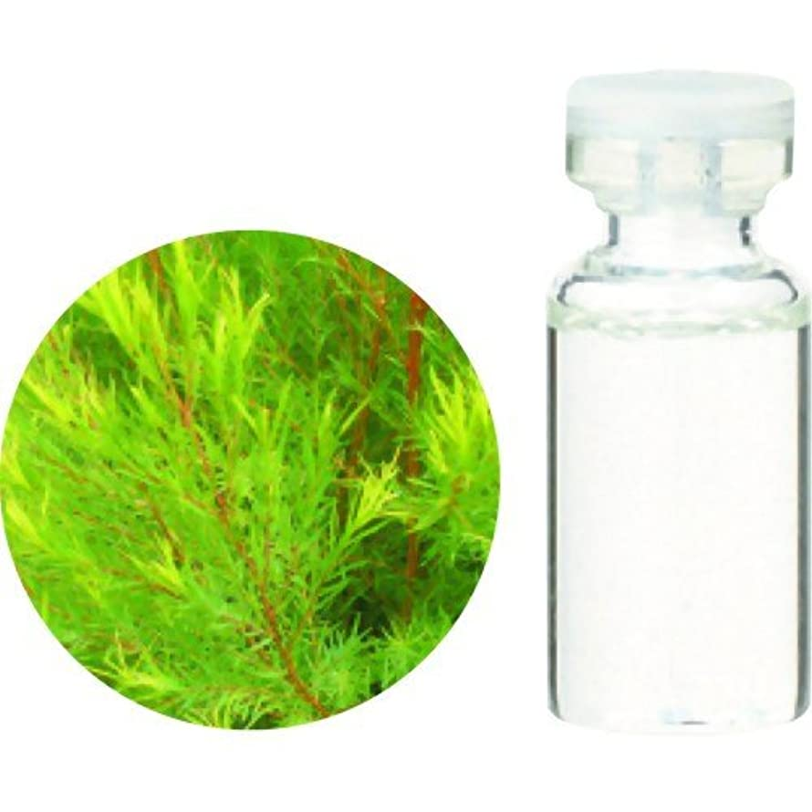 成熟した湾添加剤生活の木 ORGティートゥリー 3ml
