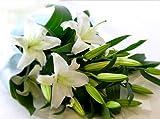カサブランカ花束 5~7りんを5本