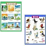 B Baosity 壁ポスター 学習ポスター ウォールチャート 教育玩具 ホーム スクール用 クラス用品 鳥&自然 2枚