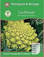 HIGH発芽SEEDSだけでなくPLANTS:トンプソン&モーガン - 野菜 - カリフラワーベロニカF1ハイブリッド - 20個の種子