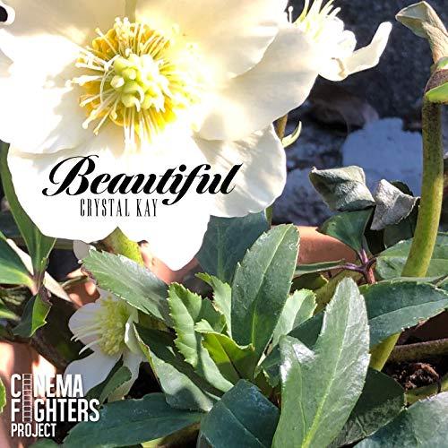 Crystal Kay【Beautiful】歌詞の意味を解釈!美しいと歌う理由は?健気な種の運命とはの画像