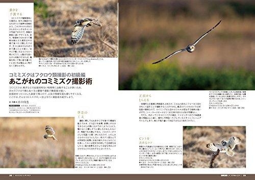 BIRDER(バーダー)2017年11月号 ゆる〜く楽しむ カモメ類/コミミズク・トラフズク