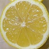 国産 檸檬 レモン Lサイズ 2.5kg 17個前後入り