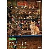 岩合光昭の世界ネコ歩き ソレントとカプリ島 DVD【NHKスクエア限定商品】