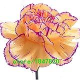 ホット販売16色ありカーネーションの種バルコニー鉢植えコートヤードガーデンはナデシコCaryophyllus花の種子植物100PCS