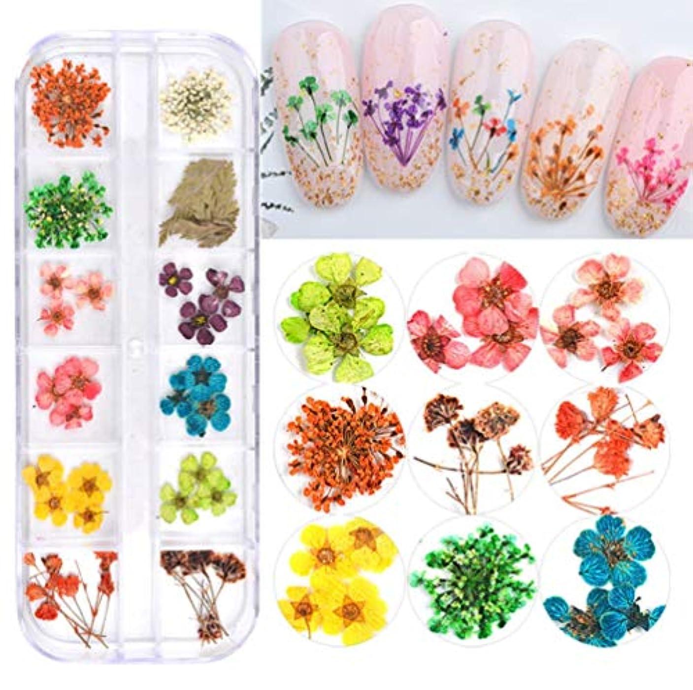 数学安息知る1ボックス ドライフラワー レースのような柄 天然の押し花 12色 ジェルネイル用 デコ 素材 ネイルパーツ