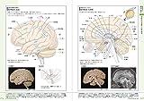 病気がみえる 〈vol.7〉 脳・神経 画像