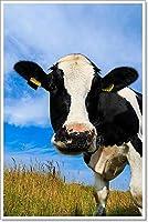 Barewalls Curious Dairy Cowクローズアップフィールドのペーパー印刷壁アート 36in. x 24in.