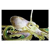 エリアラグ、キッチンマット、バスマットwith Chevron Weave–ダイアノウチェ・デザインズby Marley Ungaro–Deep sea life-オクトパス Small 2 X 3 ft AR-MarleyUngaroDSLOctopus1