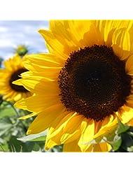 アロマフレグランスオイル ひまわり(Sunflower)