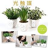 fleurmelody 光触媒 人工観葉植物 造花 3個セット 多肉植物 ユーカリ2種 Ph-03-AB