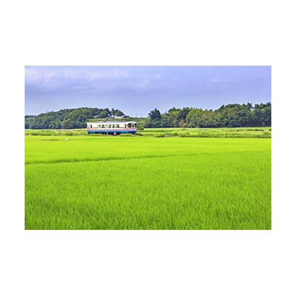 【精米】茨城県産 コシヒカリ 平成28年産の紹介画像2