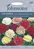 JOFL 英国ジョンソンズシード Carnation GIANT CHAUBAUD DOUBLE MIXED カーネーション・ジャイアント・シャボー・ダブル・ミックス