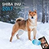 LittleGifts Shiba Inu 2017 Calendar (3066) [並行輸入品]