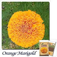 オレンジアステカマリゴール:盆栽フラワーシード1袋50個シードオレンジアステカマリゴールドタゲテスエレクタフラワーシード