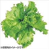 ユーイング 水耕栽培器 Green Farm グリーンファーム 水耕栽培種子 レタス 5袋セット UH-LA01-5SET