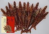 宜野座村産 活き 車えび 1kg 超大物(約18cm) 23~26尾 宜野座養殖場 鮮度抜群ピチピチ活き車海老 ぷりぷり食感と極上の甘み お刺身・お寿司・エビフライ・エビチリ・塩焼きに