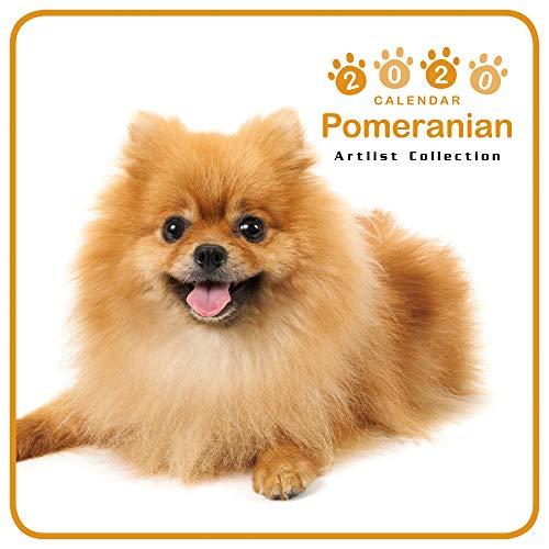 カレンダー 2020 ミニサイズ 壁掛け ポメラニアン (ミニ) 403355 ノーマルレンズシリーズ 2019年9月-2020年12月 アーリスト イヌ いぬ Pomeranian