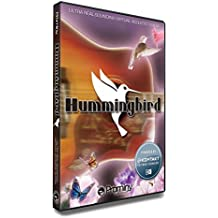 Prominy Hummingbird