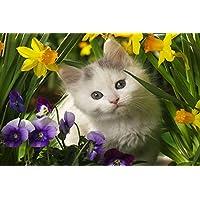 かわいい子猫動物 - #22397 - キャンバス印刷アートポスター 写真 部屋インテリア絵画 ポスター 90cmx60cm