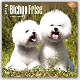 ブラウントラウト 2016年 カレンダー 壁掛け 犬 ビション・フリーゼ 16-ZB-504028