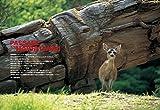 Coyote No.59 星野道夫の遥かなる旅 画像