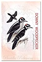 Tree-Free Greetings EcoNotes 12-Count Notecard Set with Envelopes 4 x 6 Inches Downy Woodpecker (66308) [並行輸入品]