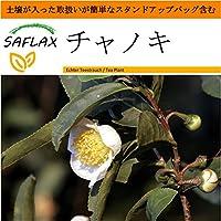 SAFLAX - Garden in the Bag - チャノキ - 6 個の種。- 取扱いが簡単なスタンドアップバッグに栽培用土壌が入っています - Camelia sinensis