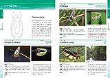 日本の水生昆虫 (ネイチャーガイド) 画像