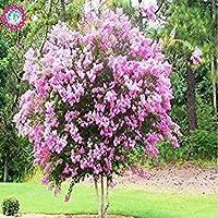 ASTONISH SEEDS:3 : 100pcs/bag Gaint Red&Violet Bonsai Crape tree Seeds flower seeds, Shrub bonsai garden Lagerstria seeds 3