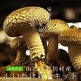 しいたけ栽培キット(菌床ブロック×2個 国産 きのこ 椎茸)肉厚でシャキシャキの食感 採れたて新鮮な無農薬野菜