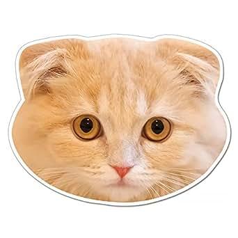 kmag 猫の顔マグネット スコティッシュフォールド