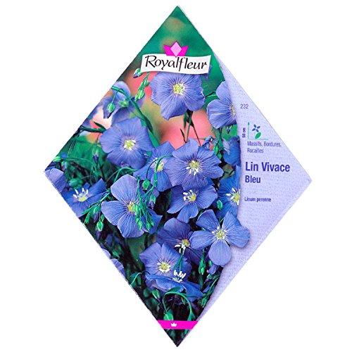[春・秋まき 亜麻 リナム 花タネ][フランス花の種]リナム(フラックス)ブルー * ノーブランド品