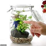 (熱帯魚 水草)私の小さなアクアリウム ?ベタと水草の共演? 水草と生体キット 1セット 説明書付き 本州・四国限定[生体]