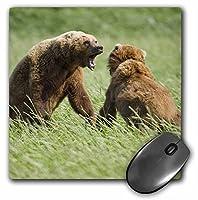 3drose LLC 8x 8x 0.25アラスカKatmai NPブラウンBear Halloベイポール・Soudersマウスパッド(MP 87657_ 1)