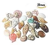 【エデンの貝殻】海の贈り物 ワクワク いろんな大きな貝殻 スペシャル 詰め合わせ どっさり 25種セット 約450g[S-13]