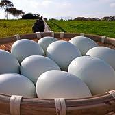 東北牧場 青玉卵 6個