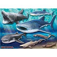 巨大ザメ&深海ザメ A3サイズ 720ピース ミュージアム ジグソーパズル