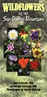 Wildflowers of the San Gabriel Mountains