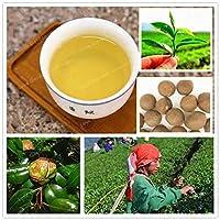 30種:珍種ツバキSinensis緑茶の種珍しい新鮮な香りの良い盆栽の植物