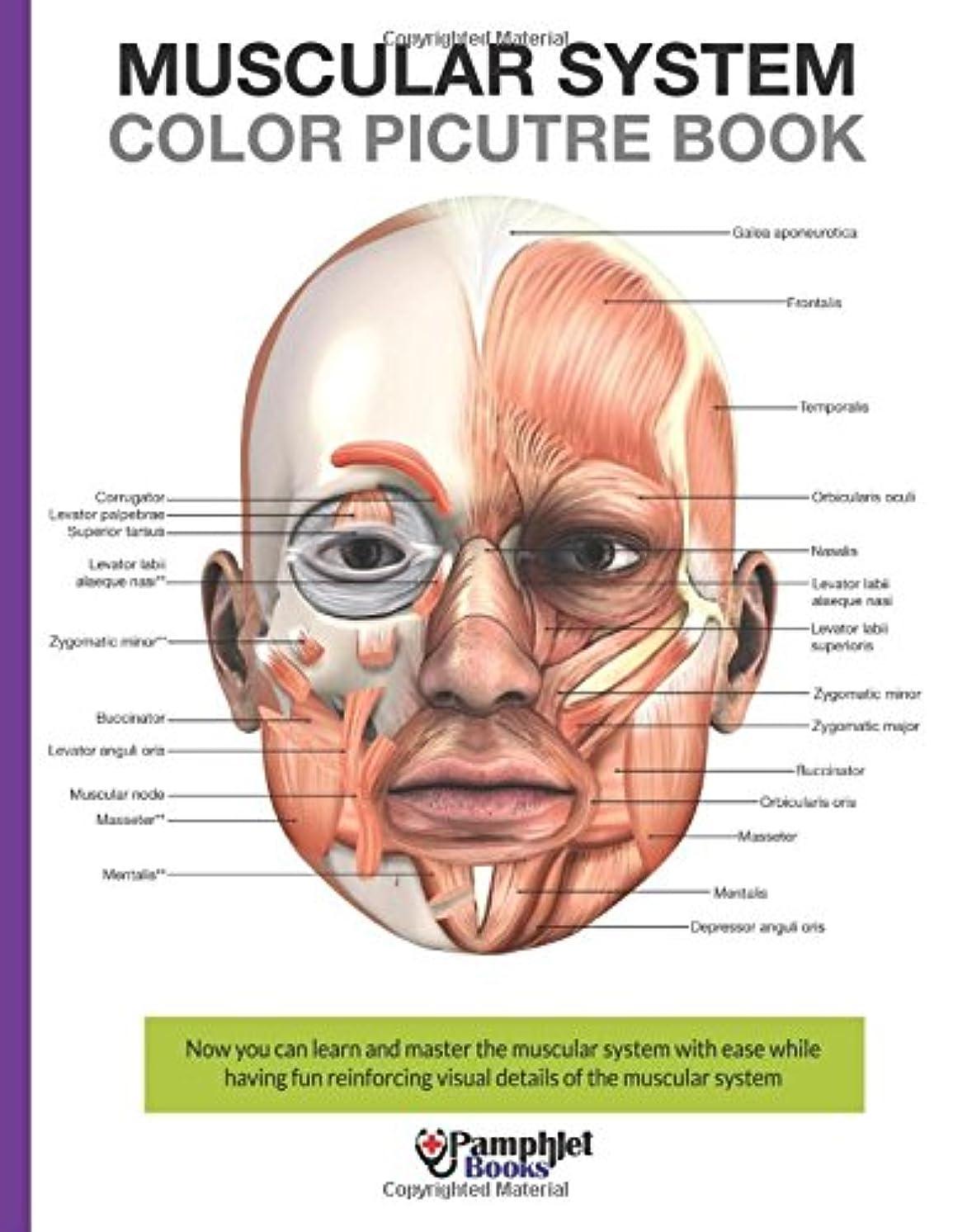 バング雇った夏Muscular System Color Picture Book: Beautiful Illustrations With Concisely and Clearly Readable Labels